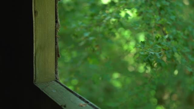 vídeos de stock, filmes e b-roll de selective focus view of oak trees out of treehouse window - treehouse
