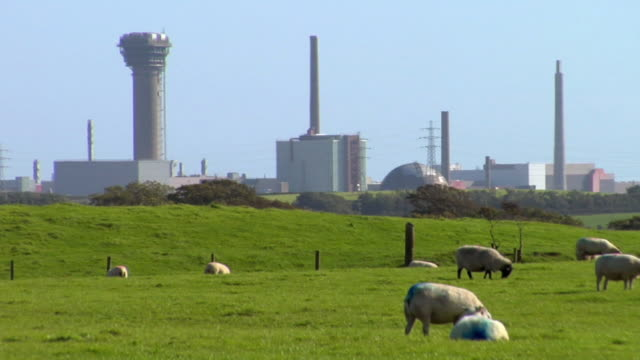 WS Sellafield nuclear plant, sheep grazing in foreground / Lake District, Cumbria, UK