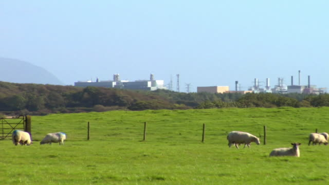 ws pan sellafield nuclear power plant, sheep's  grazing in foreground / lake district, cumbria, uk   - sellafield nuclear power station stock videos & royalty-free footage