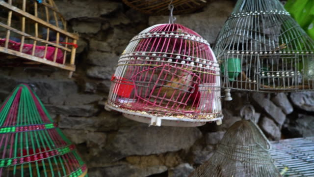 selling a bird in a market - käfig stock-videos und b-roll-filmmaterial