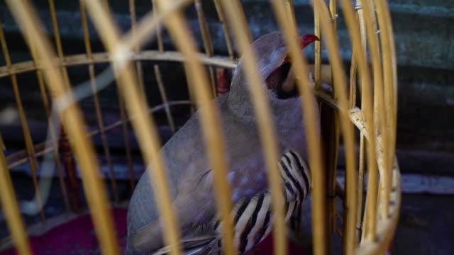 vidéos et rushes de selling a bird in a market - bouche des animaux