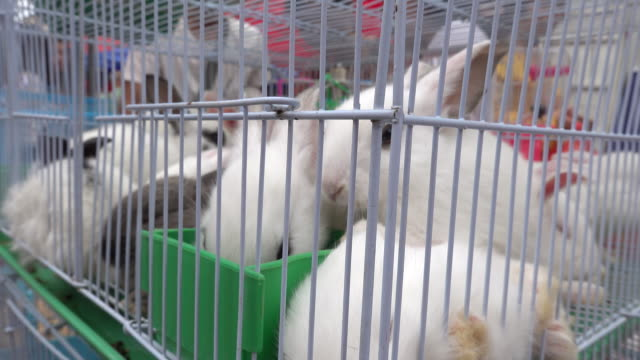 selling animal rabbit pet in the temple fair in shangdundu town, fuzhou city, jiangxi province - exoticism stock videos & royalty-free footage