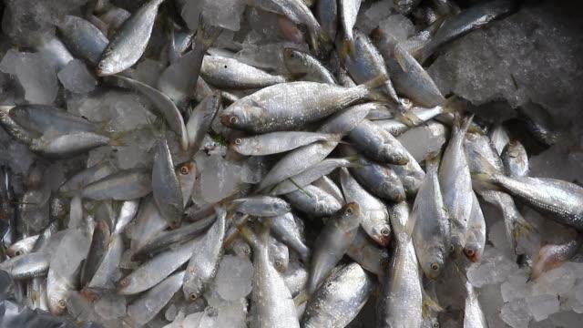 selling illegal jatka in jatrabari fish market, dhaka. fishing jatka is illegal according to the bangladesh law. - 魚介類点の映像素材/bロール