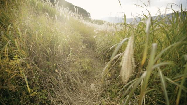 Sengokubara Hakone