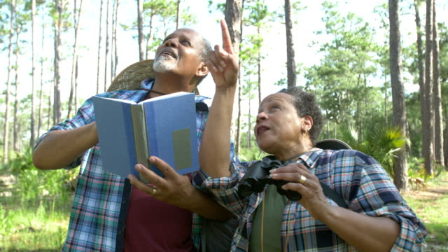 senior african-american couple bird watching - osservare gli uccelli video stock e b–roll