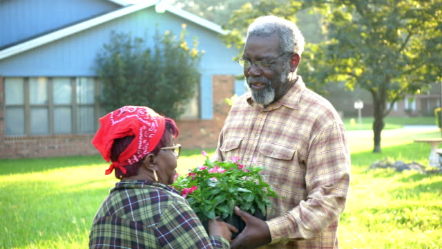 senior african-american couple planting flowers in yard - waist up stock videos & royalty-free footage