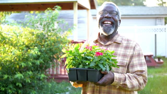 senior african-american man gardening - senior men stock videos & royalty-free footage