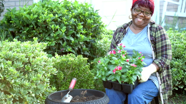 vídeos de stock e filmes b-roll de senior african-american woman gardening in yard - colocar planta em vaso