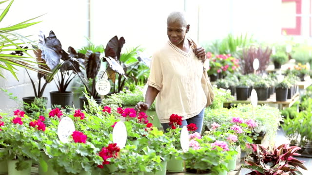 senior african-american woman shopping in plant nursery - 60 64 years stock videos & royalty-free footage