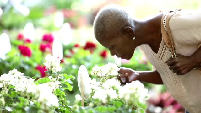 senior african-american woman shopping in plant nursery - garden center stock videos and b-roll footage