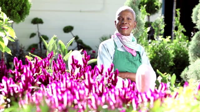 senior african-american woman working in garden center - retail occupation stock videos and b-roll footage