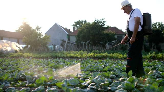 シニア農学野菜農園で農薬を散布 - 犯罪者点の映像素材/bロール