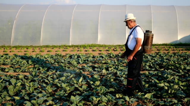 vídeos de stock e filmes b-roll de senior agriculturist spraying pesticides on vegetable plantation - inseticida