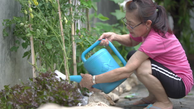 senior asian woman is watering vegetables in her organic garden at home - seedling stock videos & royalty-free footage