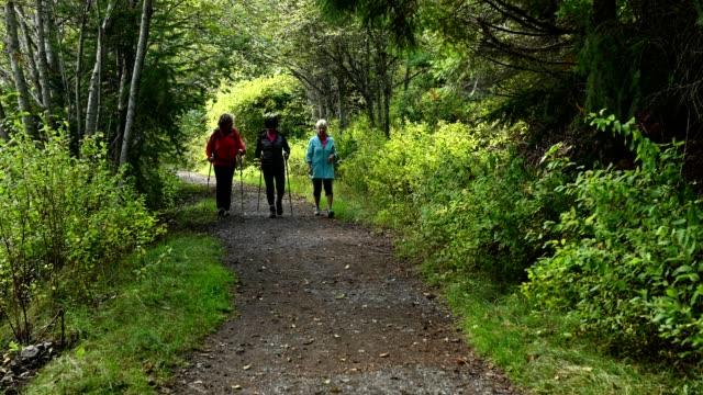 vídeos de stock e filmes b-roll de senior bonding over a hike in the great outdoors - bastão de caminhada