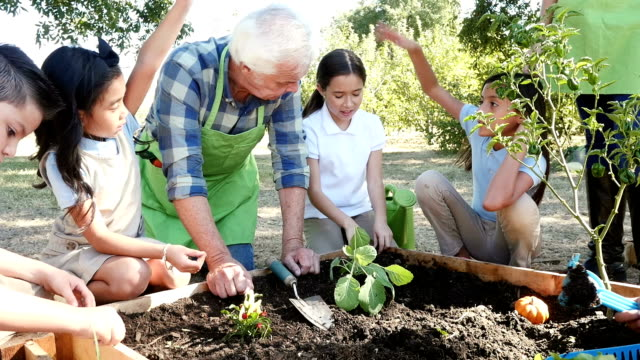 a senior caucasian gardener or farmer answers private elementary student's questions on their field trip - orchard stock videos & royalty-free footage