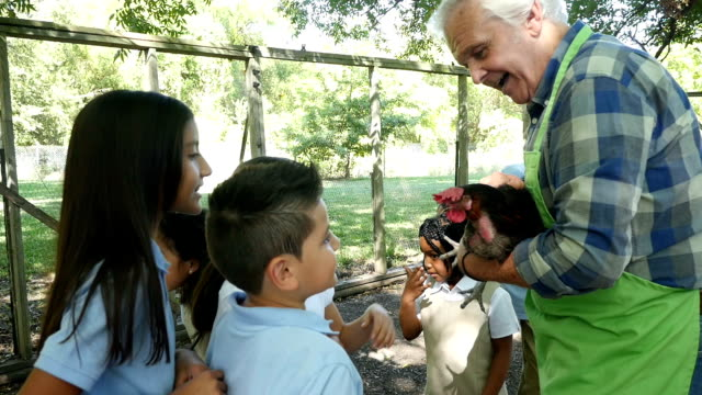 a senior caucasian male farmer holds a chicken as he teaches a group of private elementary students about the animal - field trip stock videos & royalty-free footage