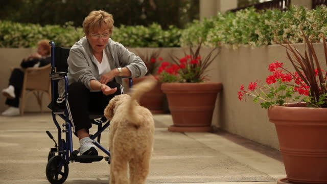 """ms senior citizen in wheelchair playing with dog / laguna woods, ca, united states"" - 人の年齢点の映像素材/bロール"