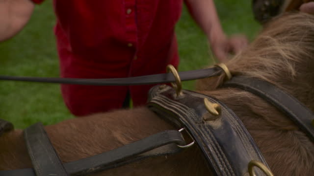 ms tu td senior couple adjusting saddle on pony outside farm / stowe, vermont, usa  - stowe vermont stock videos & royalty-free footage