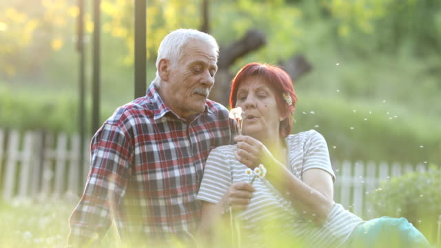 senior couple blowing dandelion - pension stock videos & royalty-free footage