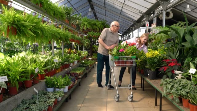 senior couple buying plants for their home pushing a shopping cart and choosing plants while laughing and talking - garden center stock videos and b-roll footage