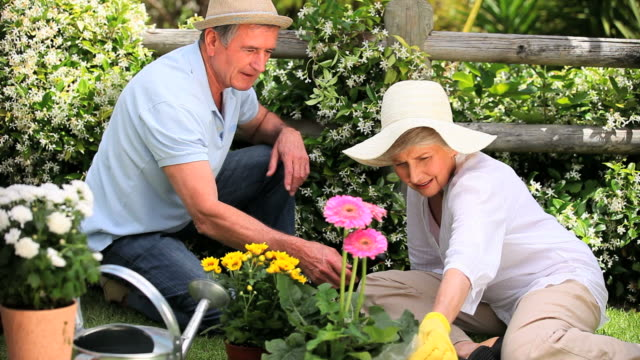 senior couple doing some gardening / cape town, western cape, south africa - gardening glove stock videos & royalty-free footage