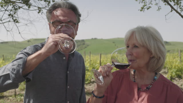 senior couple drinking wine at vineyard - vineyard stock videos & royalty-free footage