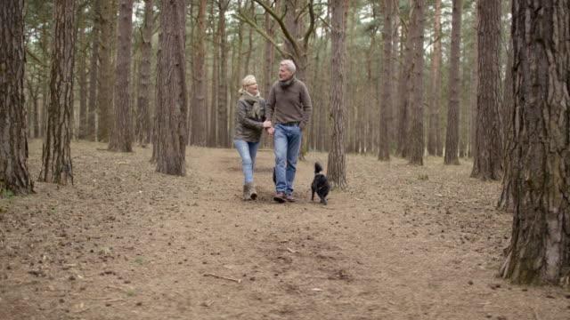 senior couple enjoying a break during a woodland walk - surrey england stock videos & royalty-free footage