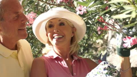 senior couple gardening, pruning shrub. - pruning stock videos & royalty-free footage