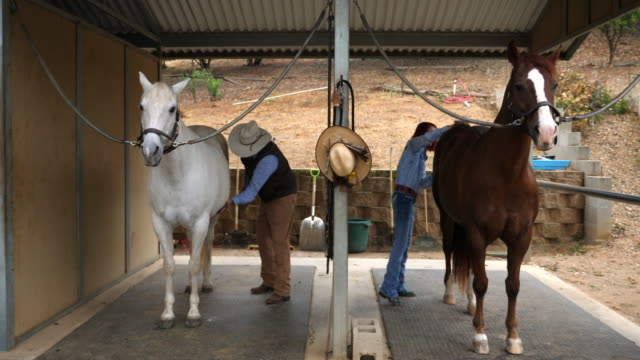 ms senior couple grooming horses in barn before early morning ride - cowboy hat stock videos & royalty-free footage