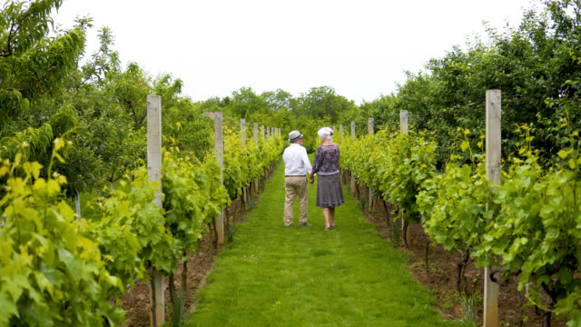 senior couple holding hands and walking through a vineyard. - agritourism stock videos & royalty-free footage