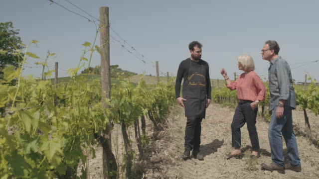 senior couple on holiday visiting vineyard - toskana stock-videos und b-roll-filmmaterial