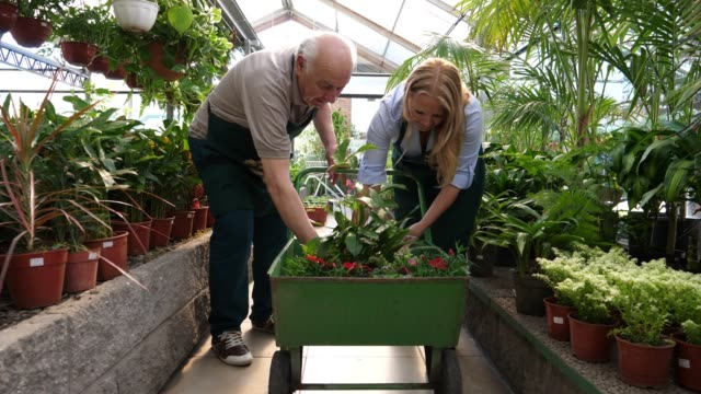 senior couple owners of a garden center preparing an order for a customer putting plants in a cartwheel talking and smiling - 70 79 years stock videos and b-roll footage