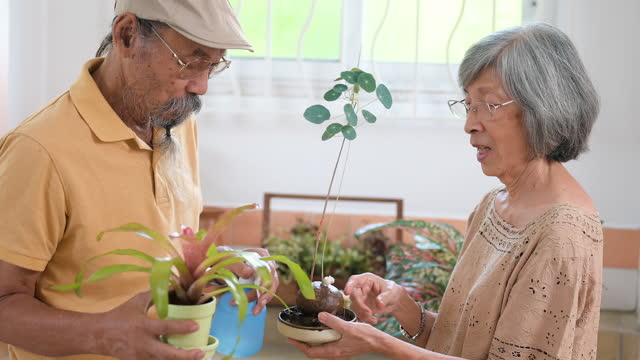 vídeos y material grabado en eventos de stock de pareja de ancianos plantando planta en maceta en casa - the nature conservancy