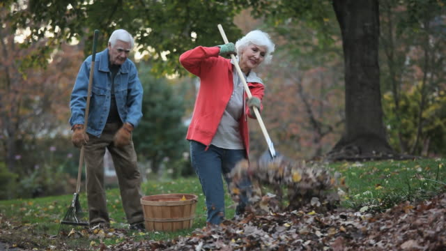 ms tu senior couple raking leaves in back yard / richmond, virginia, usa - herbst stock-videos und b-roll-filmmaterial