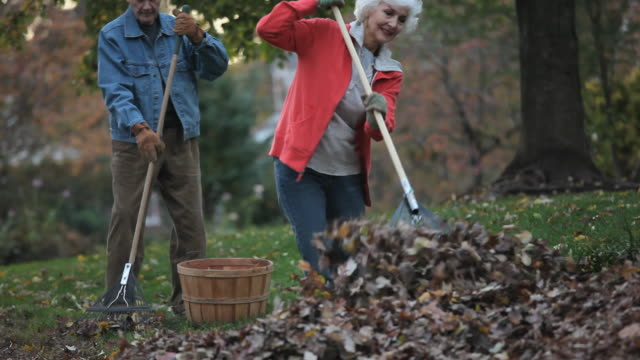 vidéos et rushes de ms tu pan senior couple raking leaves in back yard / richmond, virginia, usa - 65 69 ans