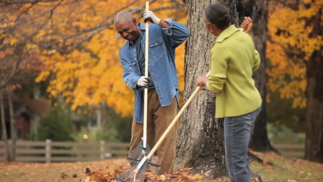 ms tu td senior couple raking leaves in back yard / richmond, virginia, usa - senior couple stock videos & royalty-free footage