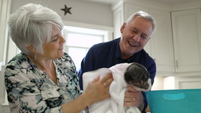 Senior couple rubbing a dog with a towel after bath