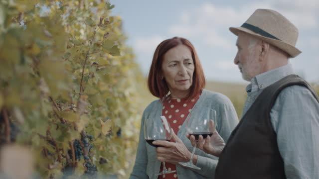 vídeos y material grabado en eventos de stock de pareja mayor hablando en vineyard - uva cabernet sauvignon
