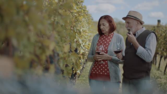 vídeos y material grabado en eventos de stock de pareja mayor caminando y degustando vino - uva cabernet sauvignon