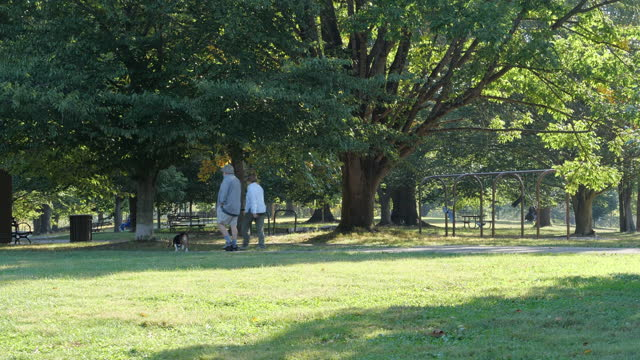 senior couple walking dog at the park in louisville amid the 2020 global coronavirus pandemic. - active seniors stock videos & royalty-free footage