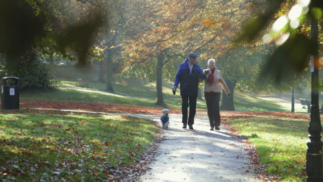 senior couple walking their dog - natural parkland stock videos & royalty-free footage