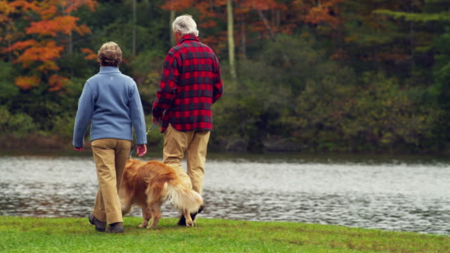 ms pan senior couple walking with golden retriever dog along lake, manchester, vermont, usa - senior couple stock videos & royalty-free footage
