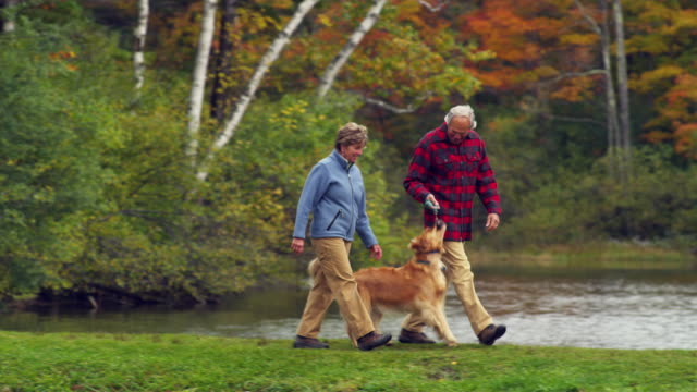 ms pan senior couple walking with golden retriever dog along lake, manchester, vermont, usa - golden retriever stock videos and b-roll footage