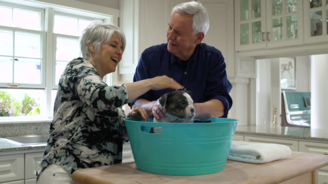 senior couple washing a puppy in a plastic tub together - pet owner stock videos & royalty-free footage