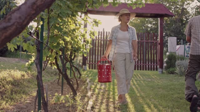 senior couple working in their vineyard - watering can stock videos & royalty-free footage