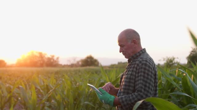 デジタルタブレットの統計を分析するシニア農家 - 農学者点の映像素材/bロール