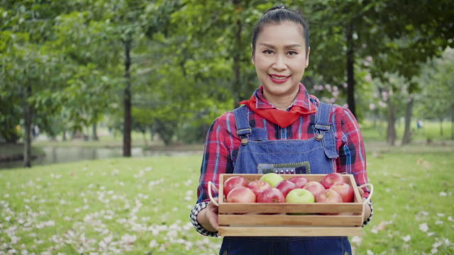 senior farmer asian woman with baskets of apples and picking apples in the organic orchard, agriculture and harvesting concept - cibo biologico video stock e b–roll