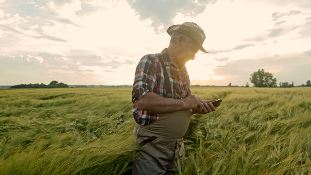 slo mo senior farmer checking his mobile phone while walking through the field of green wheat - 40 seconds or greater stock videos & royalty-free footage