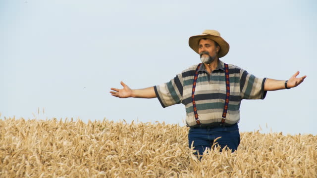 hd: senior farmer enjoying in field with arms raised - suspenders stock videos and b-roll footage